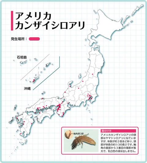 アメリカカンザイシロアリ