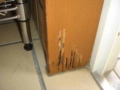玄関ドア枠 ヤマトシロアリによる被害
